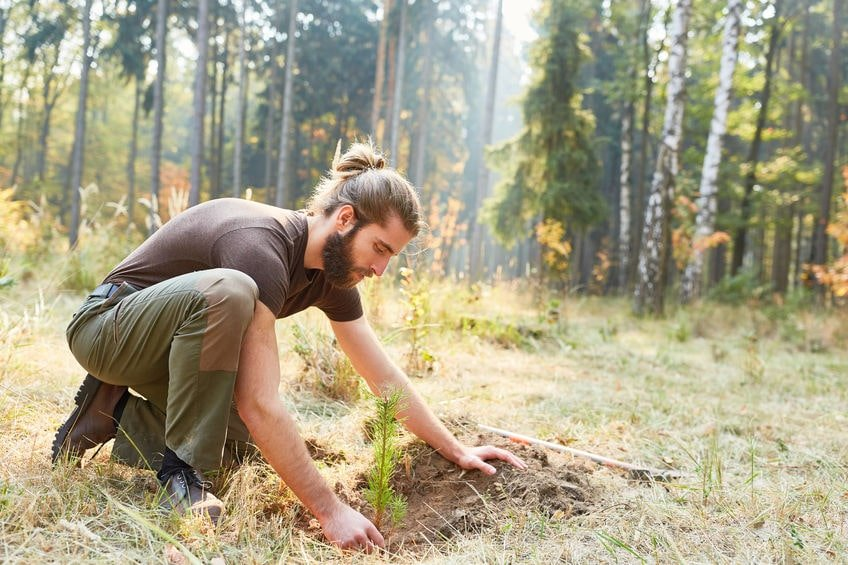 A man planting a tree while thinking about Forestry High Risk Strategy from WorkSafeBC